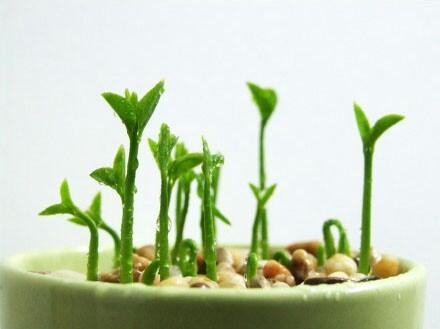 种下春天的希望 - shuren201802 - 小蚂蚁の工作室