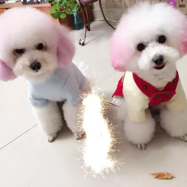 今天给狗狗也来个美美哒美女_情缘发型圈-妈宠物剪短v美女影图片