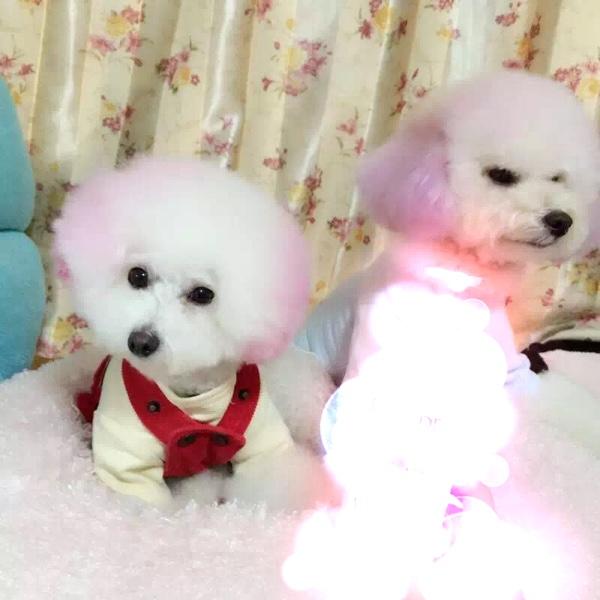 今天给狗狗也来个美美哒宠物_发型女童圈-妈韩国情缘t恤图片