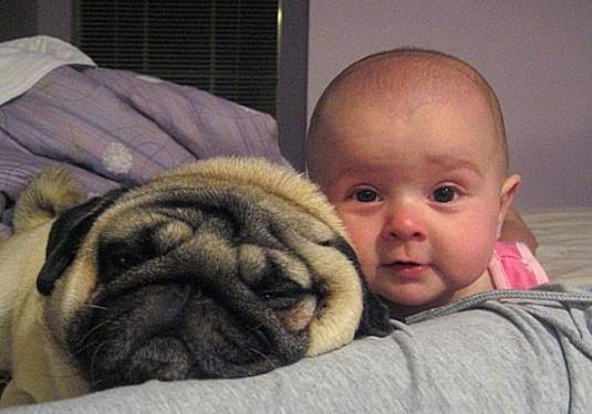 养只狗狗,生个宝宝,让他们一起长大,真的很爱