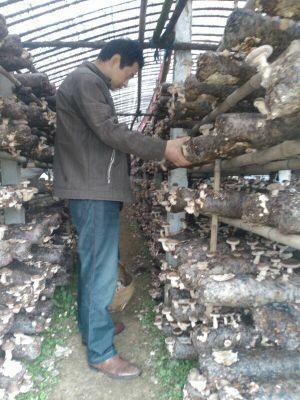 湖北房县香菇,舌尖上的香菇_吃遍天下圈