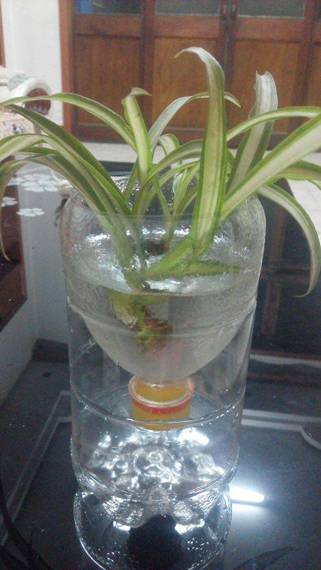 自制花盆水培吊兰