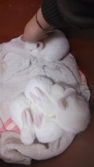 萌萌哒小白兔