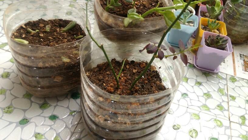 油桶做花盆图片欣赏