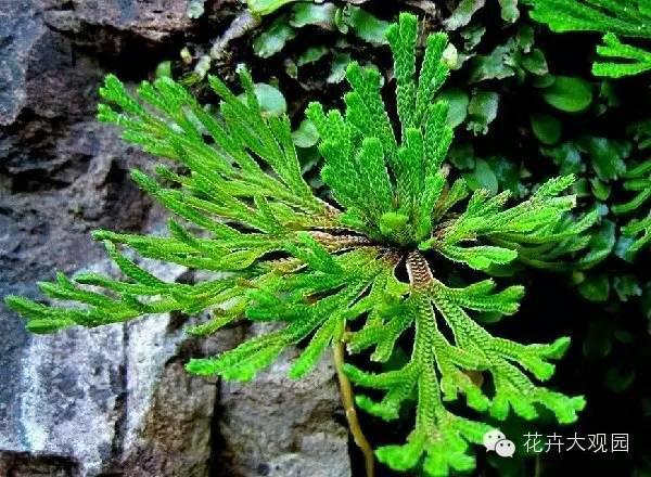 世界上生命力最强的植物