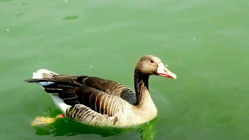 生活在水中的动物图片