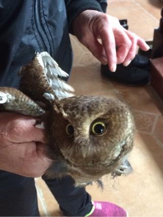 """婆婆抓了一只国家二级保护动物""""猫头鹰""""是否可以食用"""