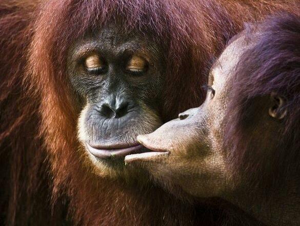 小动物们暖心亲吻瞬间