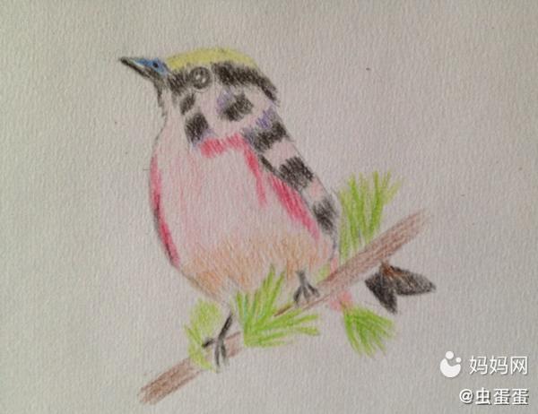 (申精)【彩铅画】艳丽的鸟儿