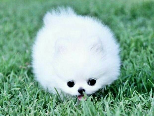 有和我一样喜欢小动物的吗?