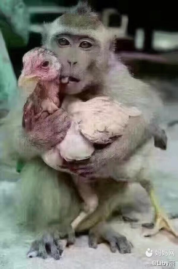 早安图片带字禽类动物