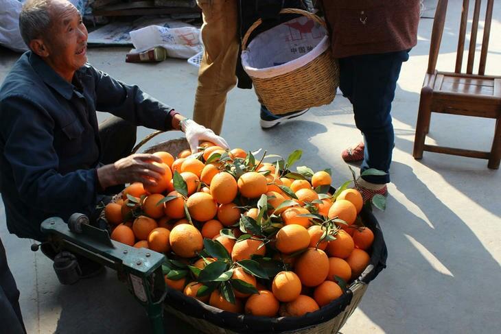 寻橙记:一】吃橙还需问出处,你所不了解的橙系